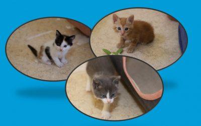 3 nouveaux chatons pris en charge aujourd'hui
