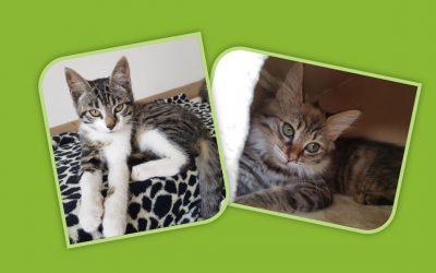 Le week-end commence par 2 belles adoptions