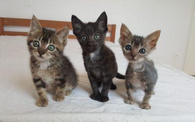 Des nouvelles des plus petits chatons pris en charge mi-août