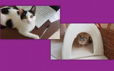 Aujourd'hui 2 nouvelles adoptions