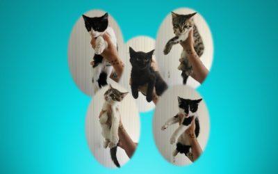 Et voilà après la fourrière, ces 4 chatons et 1 chatonne sont maintenant devenus nos protégés