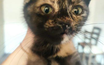 Une chatonne a rejoint l'association ce week-end