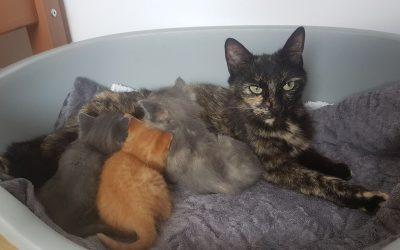 Des chatons avec leur maman mis au chaud à l'associatioin suite à un SOS