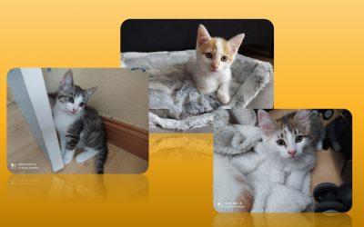 Nos 1er chatons sont adoptés
