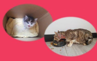 Aujourd'hui l'association a sorti 2 chats de la fourrière