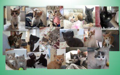20 chatons ont été pris en charge en 3 semaines !