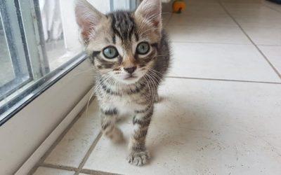 La semaine continue avec une autre adoption d'un de nos chatons