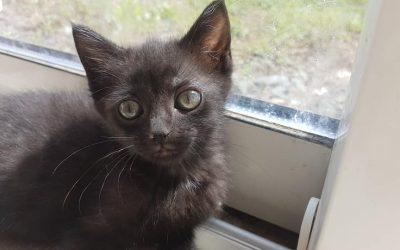 En ce dimanche ensoleillé c'est une de nos chatonnes qui a rejoint sa famille pour la vie