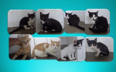 Cette fois-ci se sont 8 chatons qui ont rejoint l'association